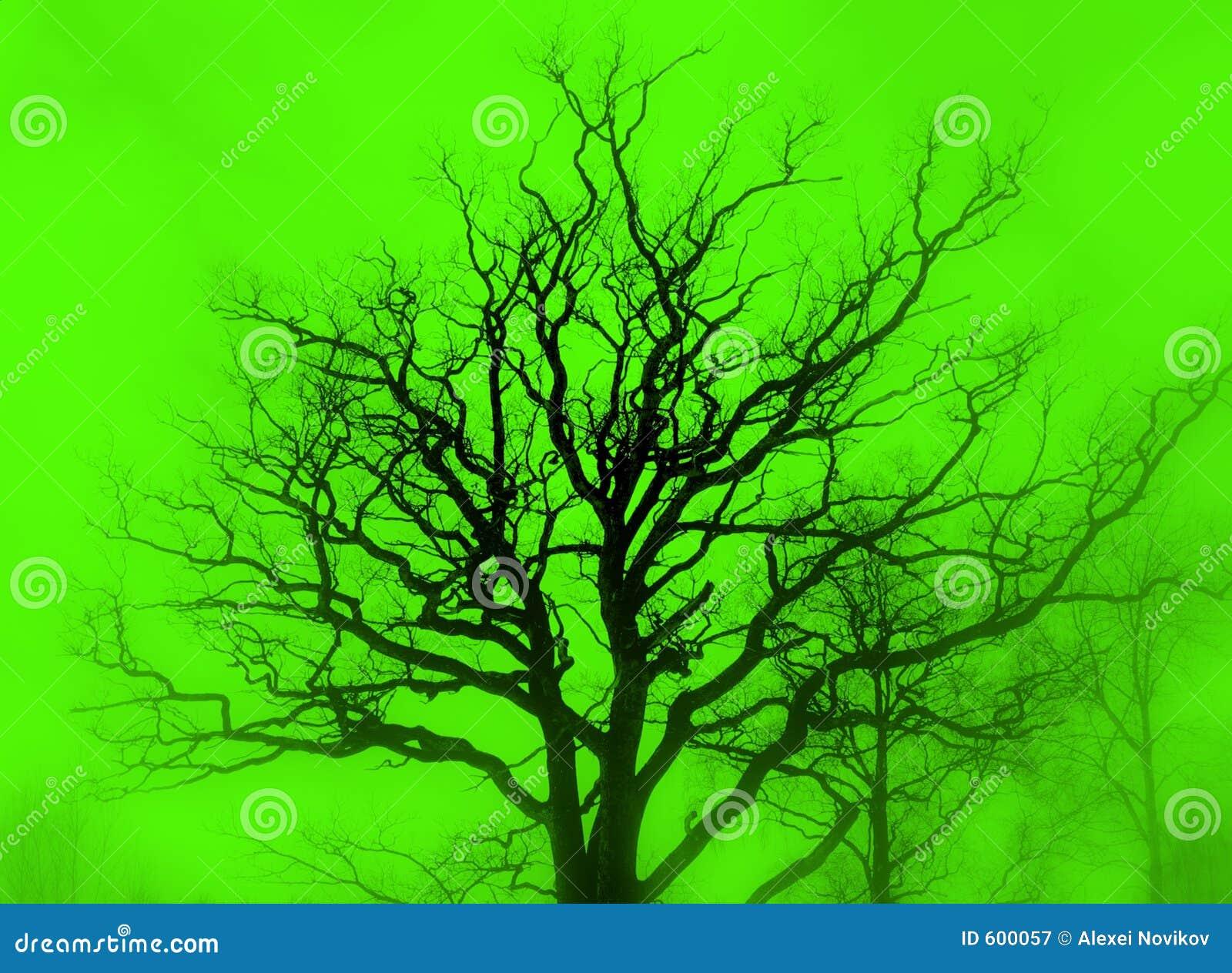 Groene het silhouet van de boom