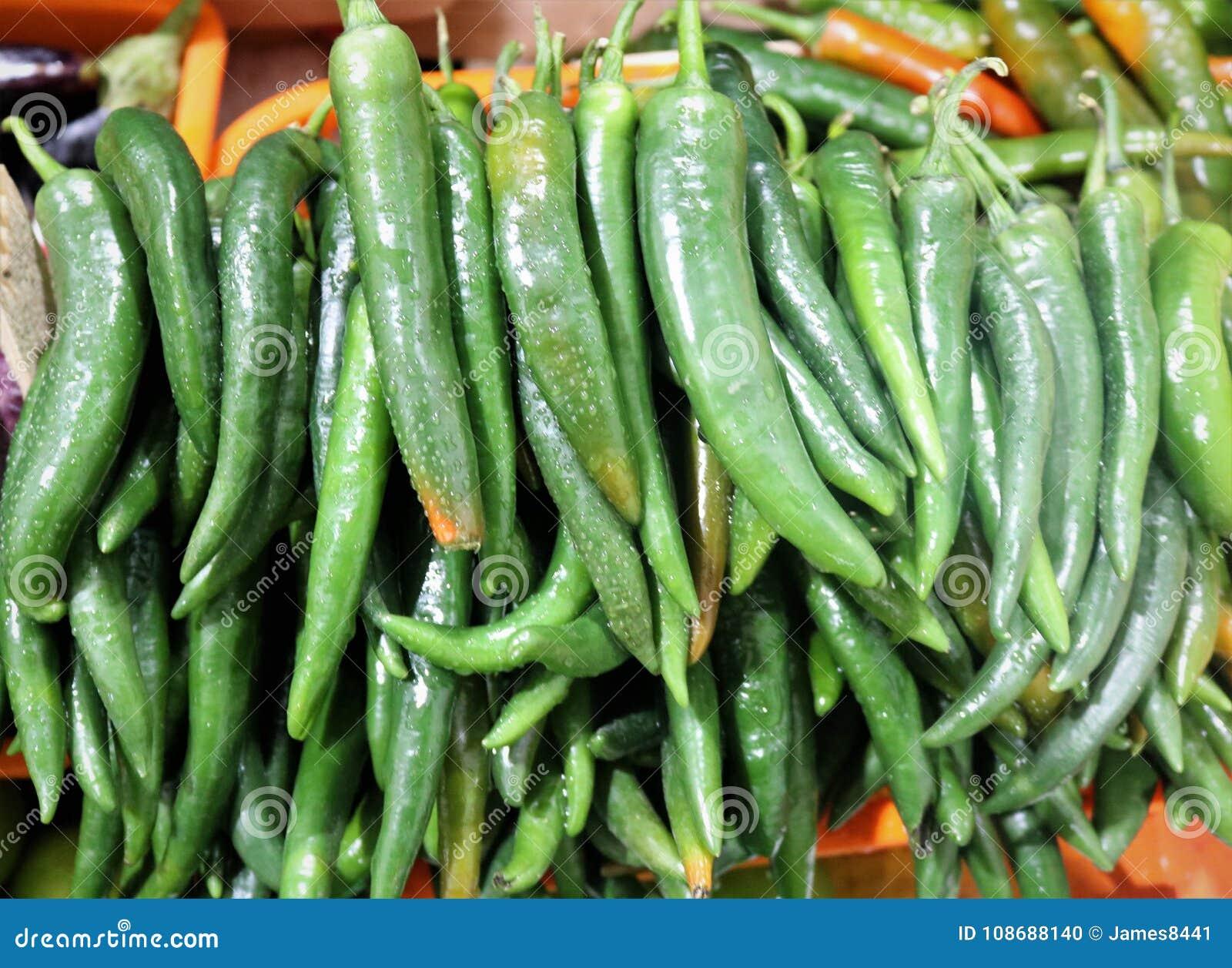 Groene hete Spaanse peperpeper