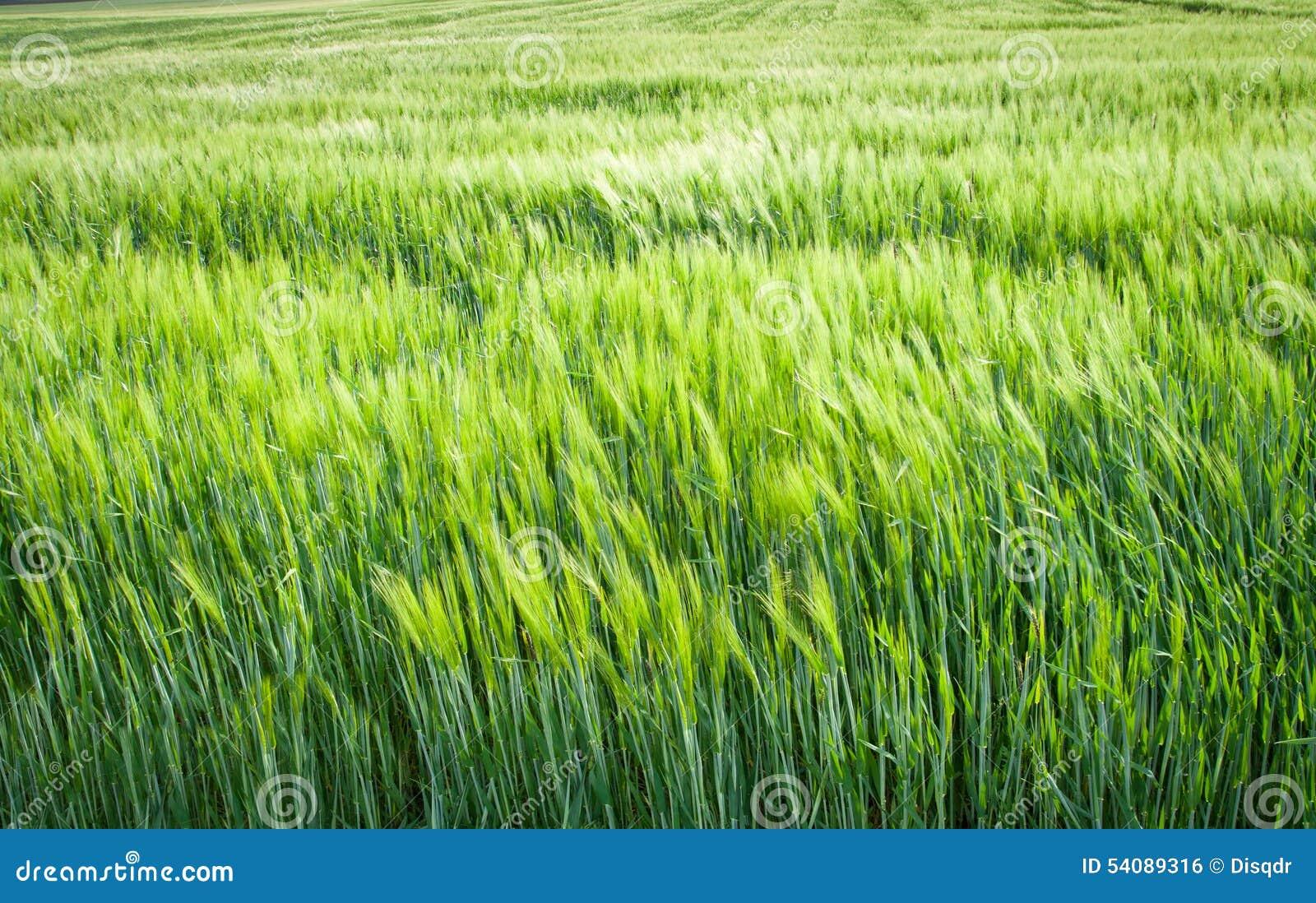 Groene ingediende gewassen