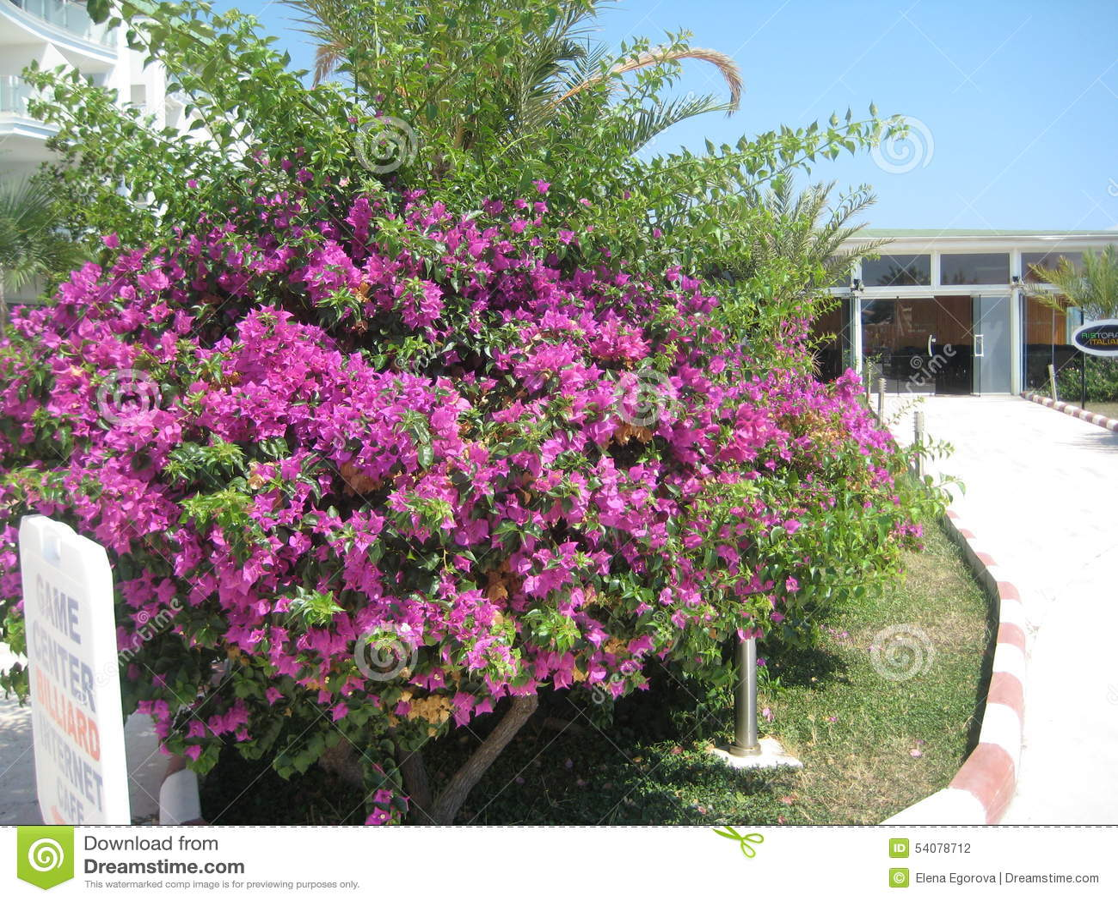 Groene installatie met bloemen