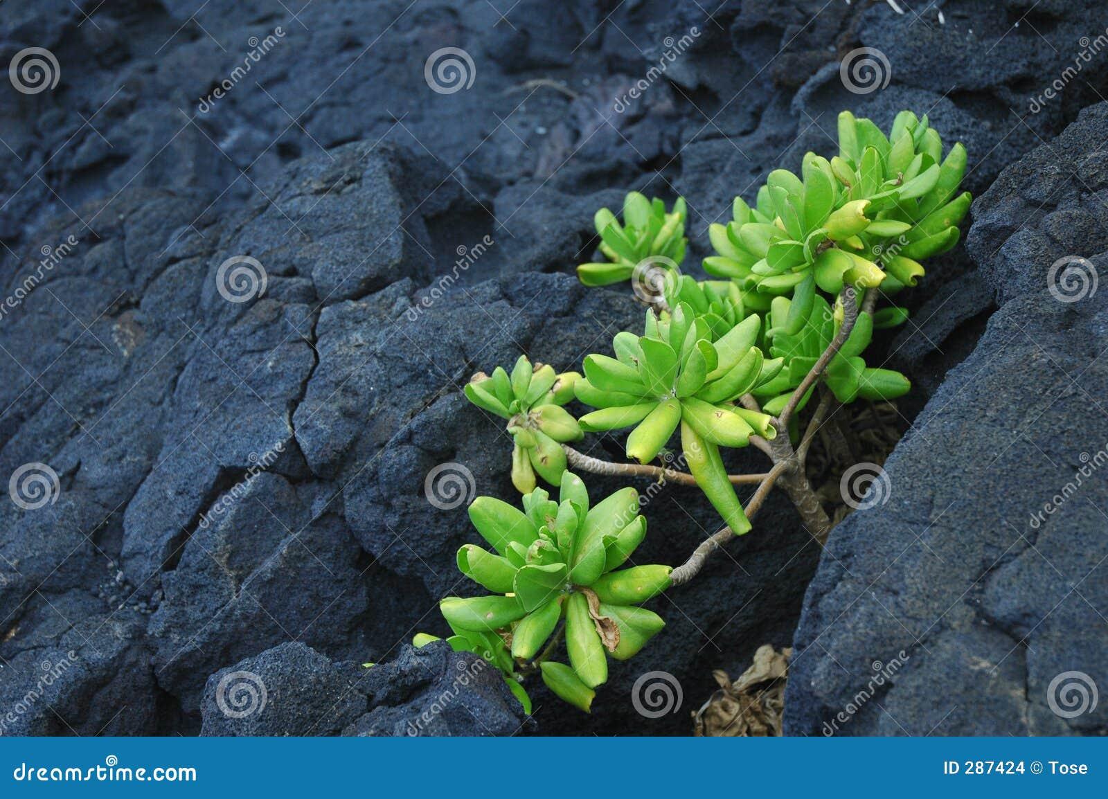 Groene installatie op rots