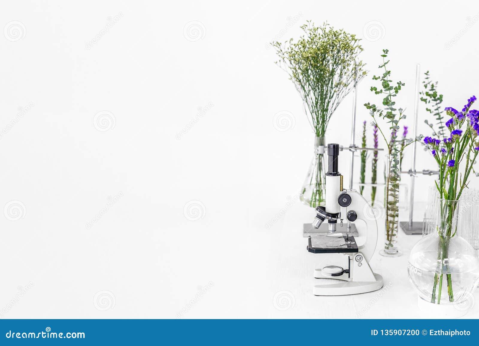 Groene installaties en wetenschappelijk materiaal in laborotary biologie Microscoop met reageerbuizen/glascontainers en klem en g