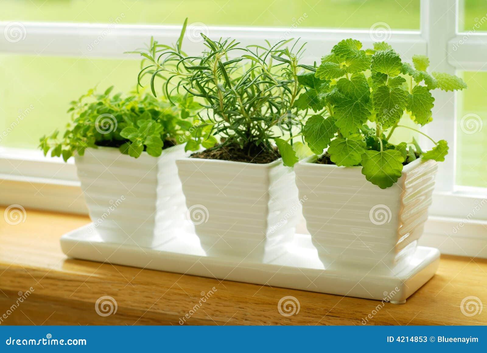 Different herbs royalty free stock image image 16265346 - Balsem