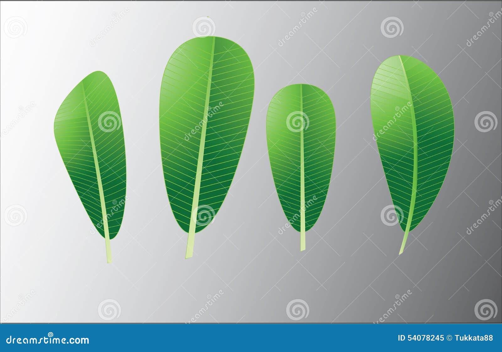 Groene lelawade eleaf achtergrond