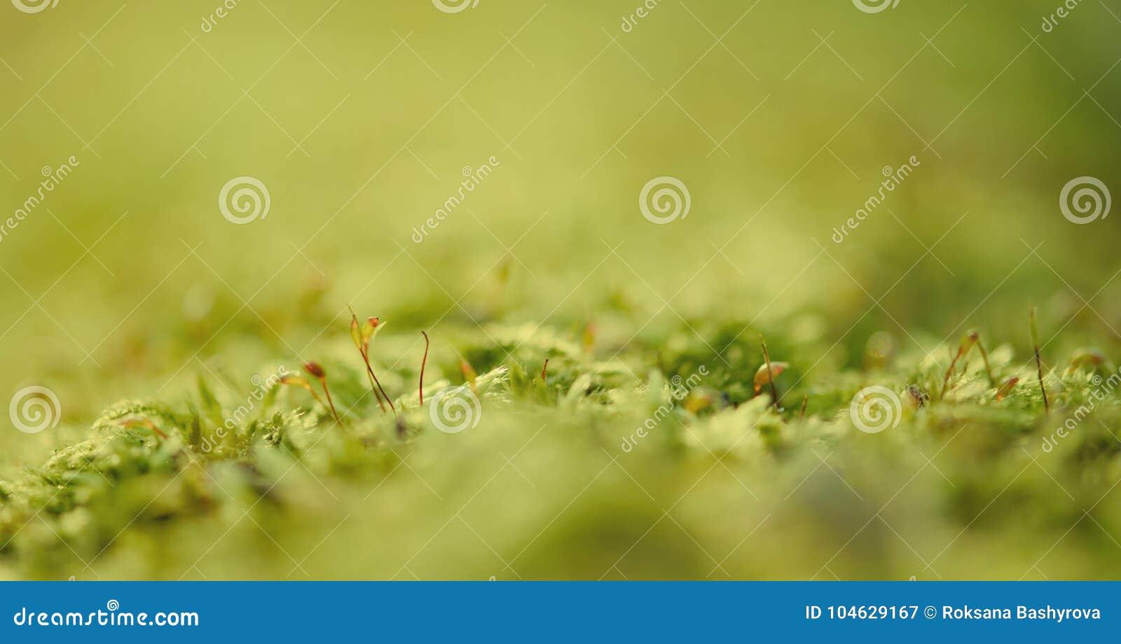 Download Groene mosmacro stock afbeelding. Afbeelding bestaande uit close - 104629167