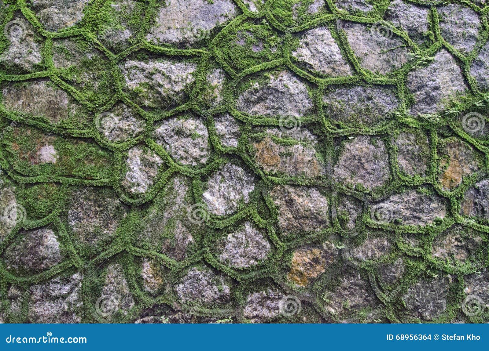 Groene mosmuur
