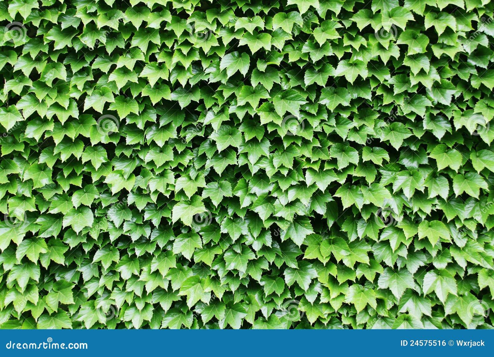 Groene Muur Royalty-vrije Stock Afbeelding - Afbeelding: 24575516