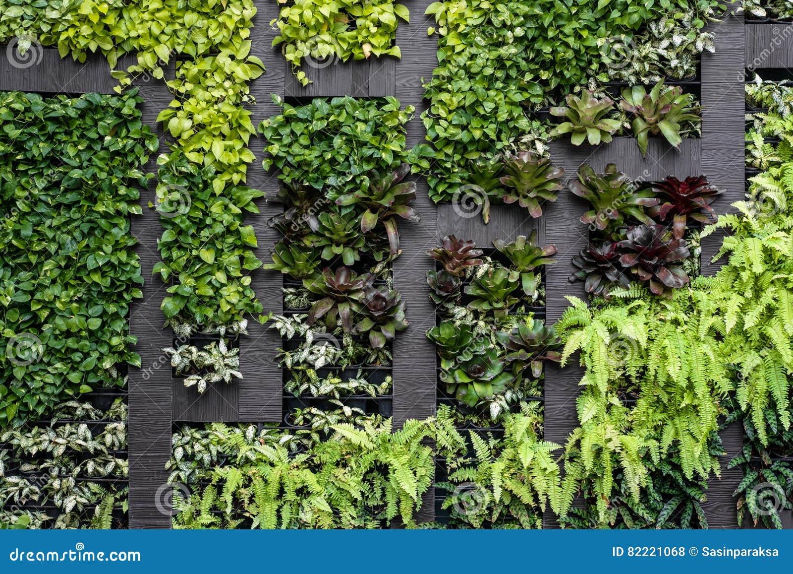 Groene muur, eco vriendschappelijke verticale tuin