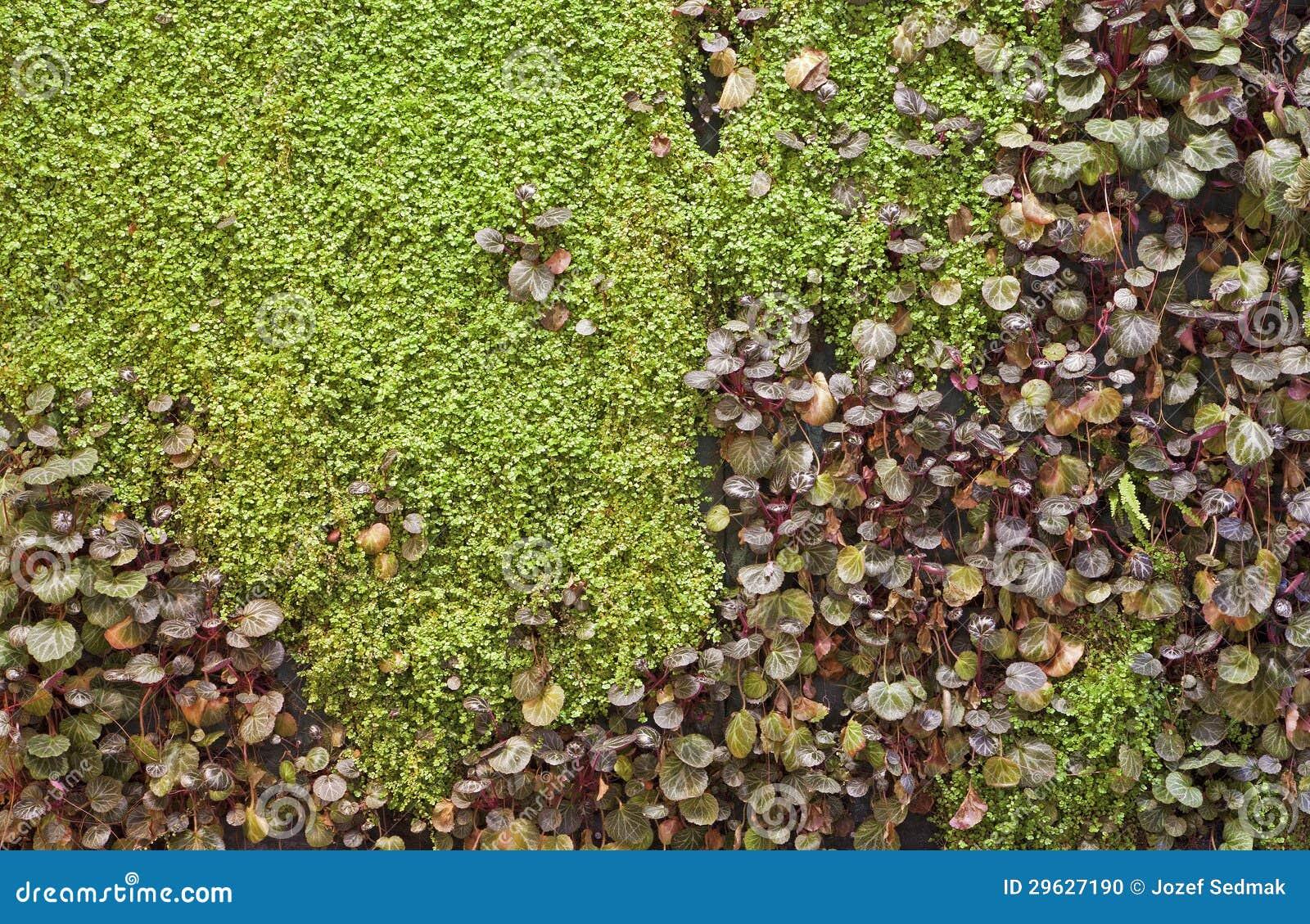 Groene Muur Tuin
