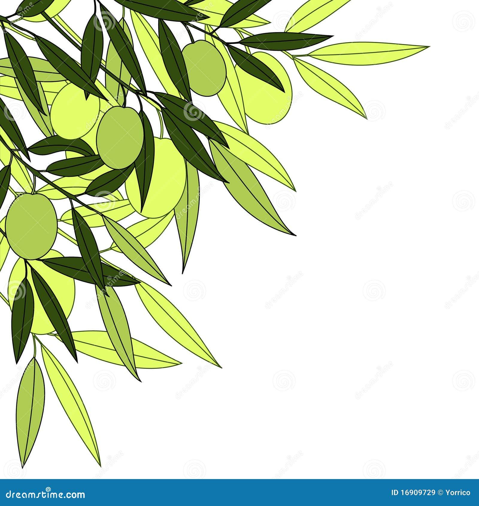 Groene olijf