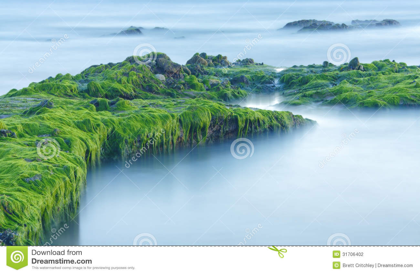 Groene overzeese algen