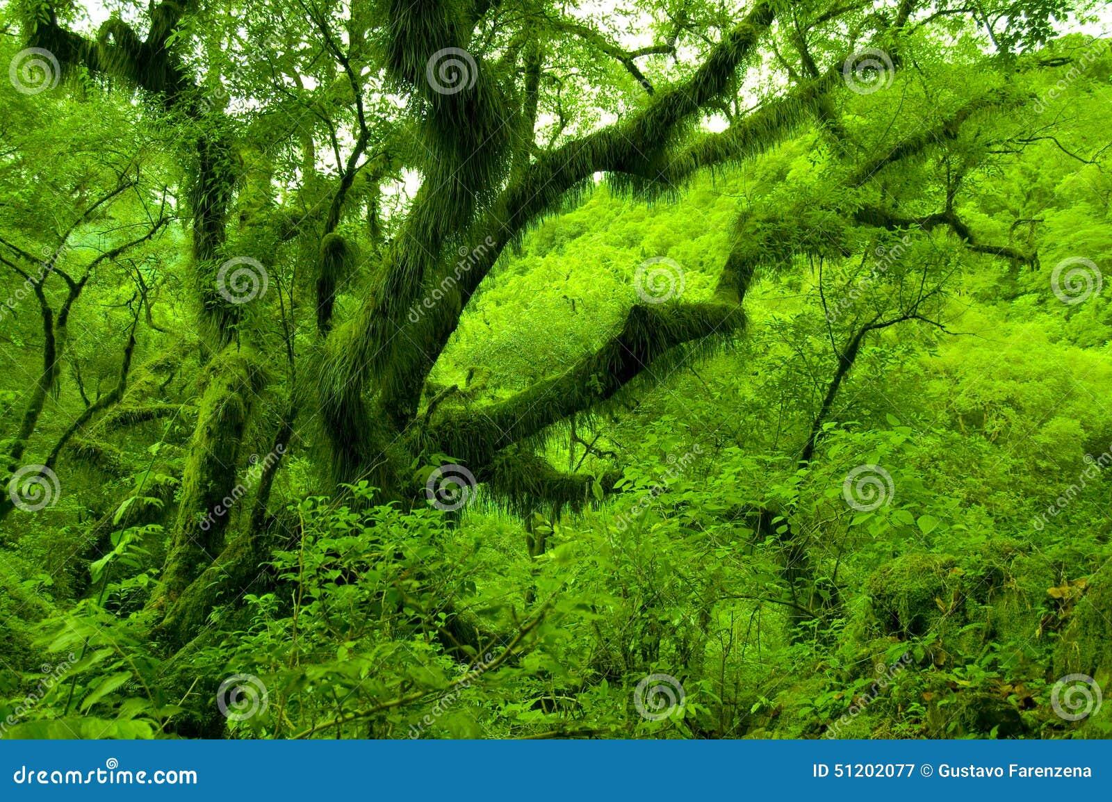 Groene Salta