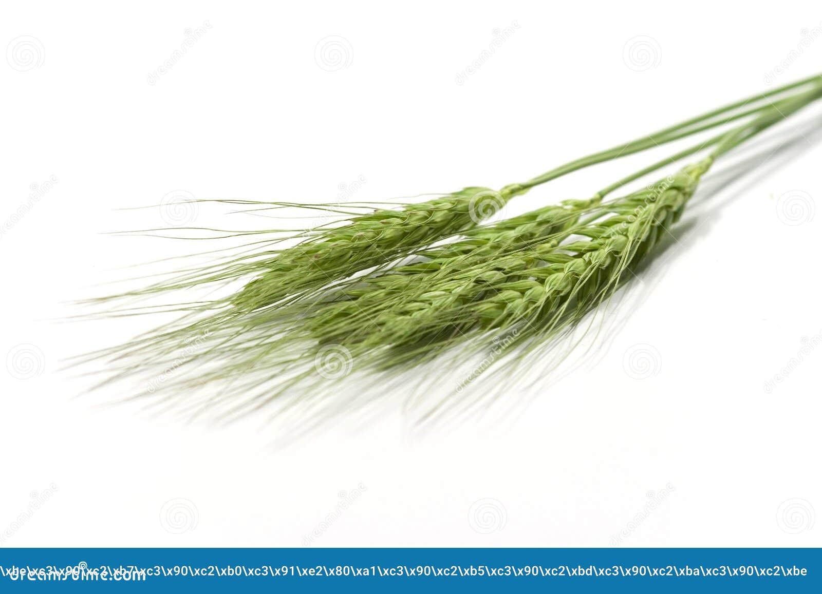 Groene tarweoren