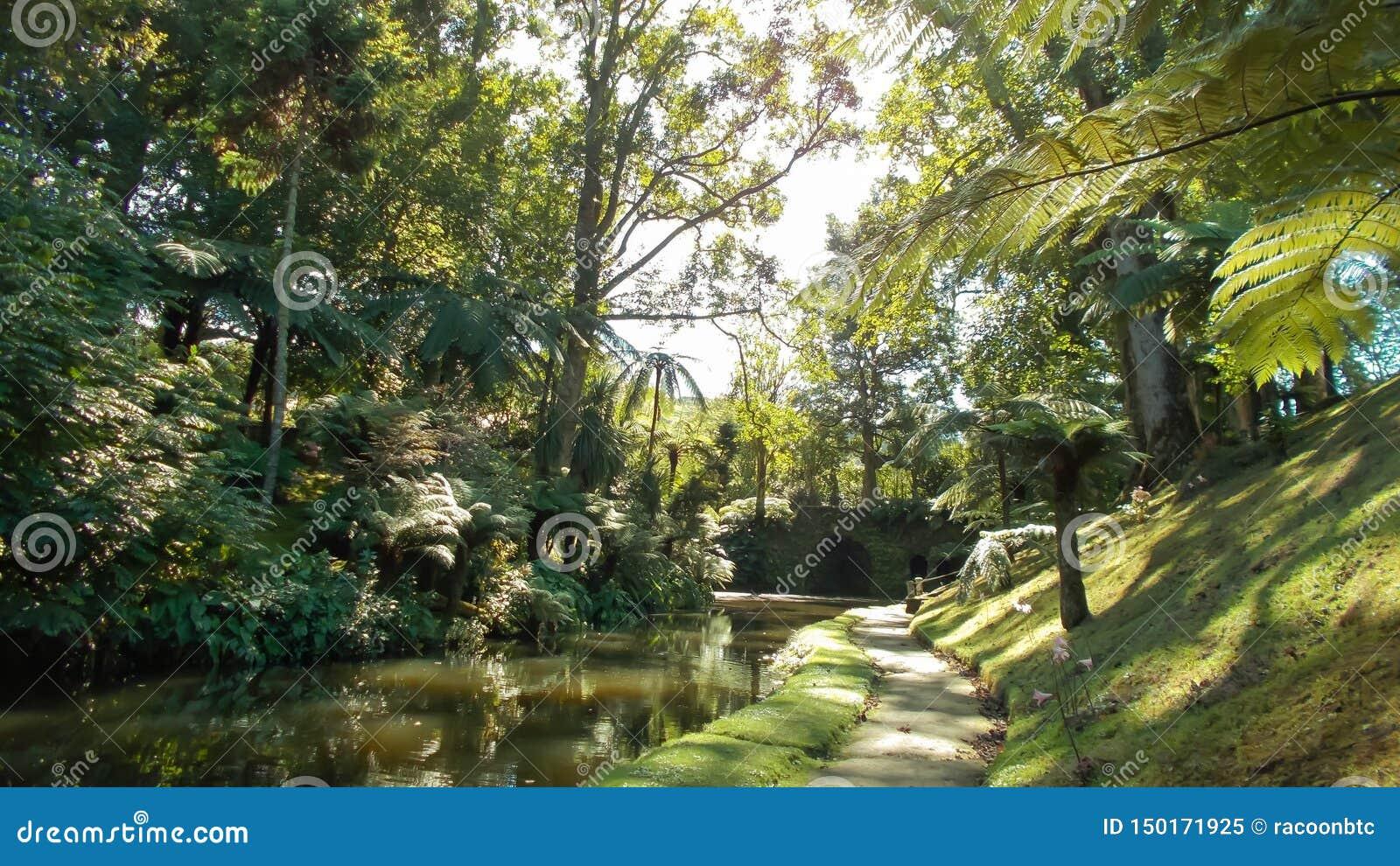 Groene tuin met stroom op Sao Miguel Island