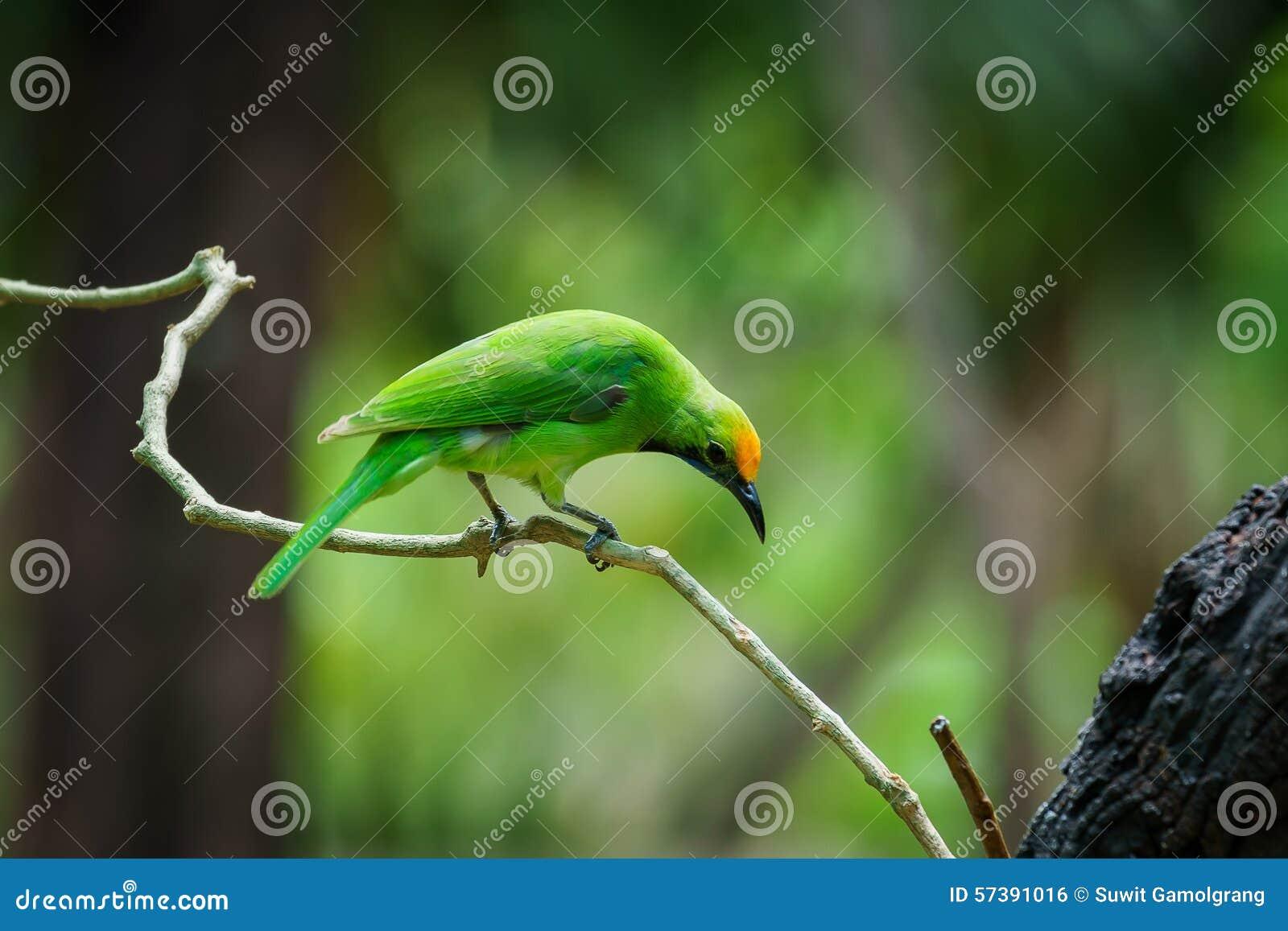 Groene vogel op blad