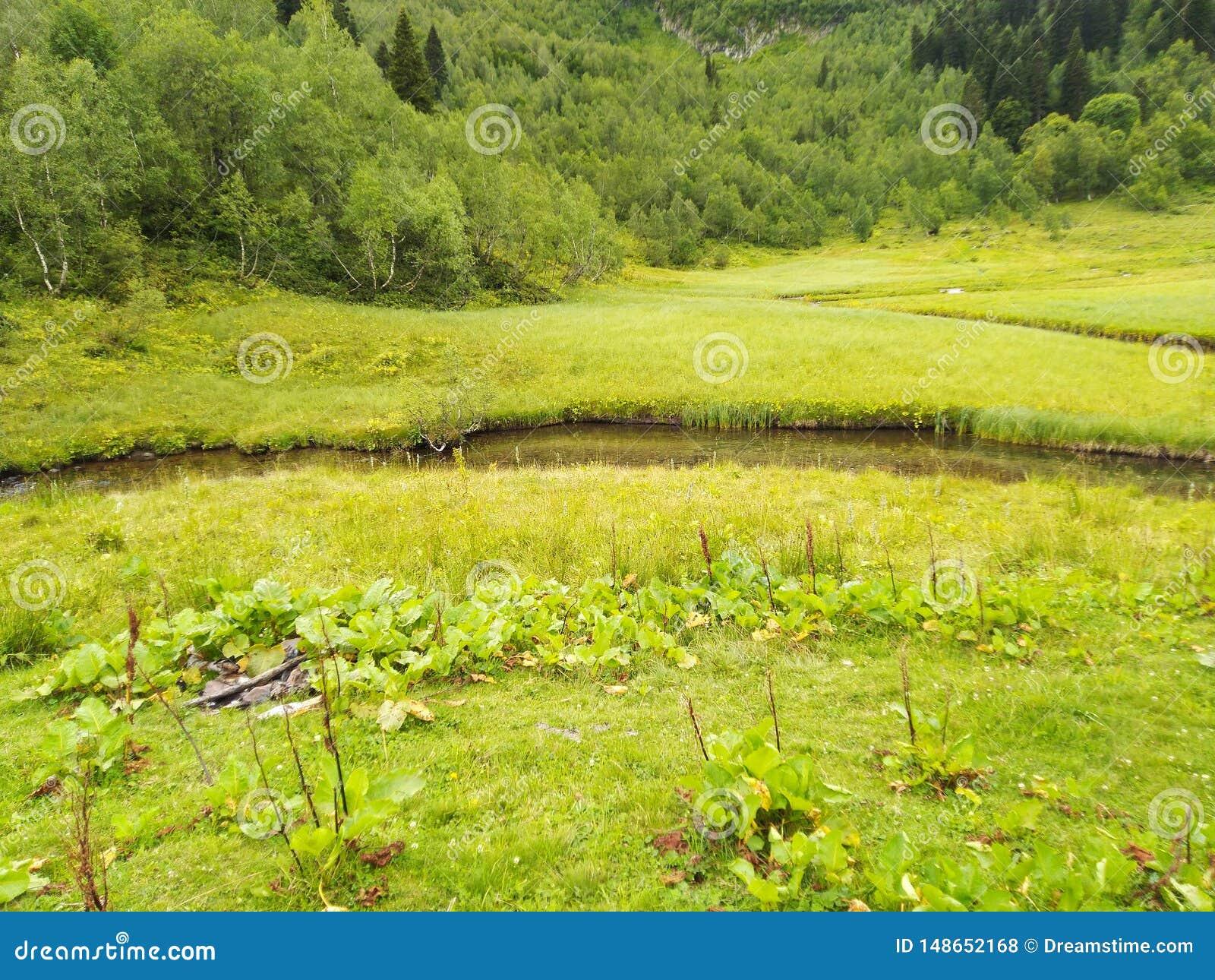 Groene weide en rivier