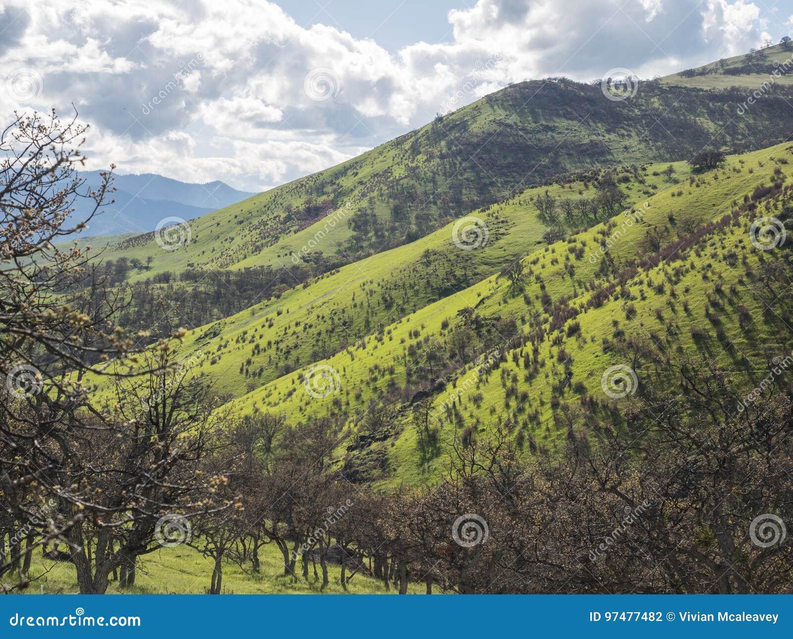 Groene weiden op bergen met eiken bomen
