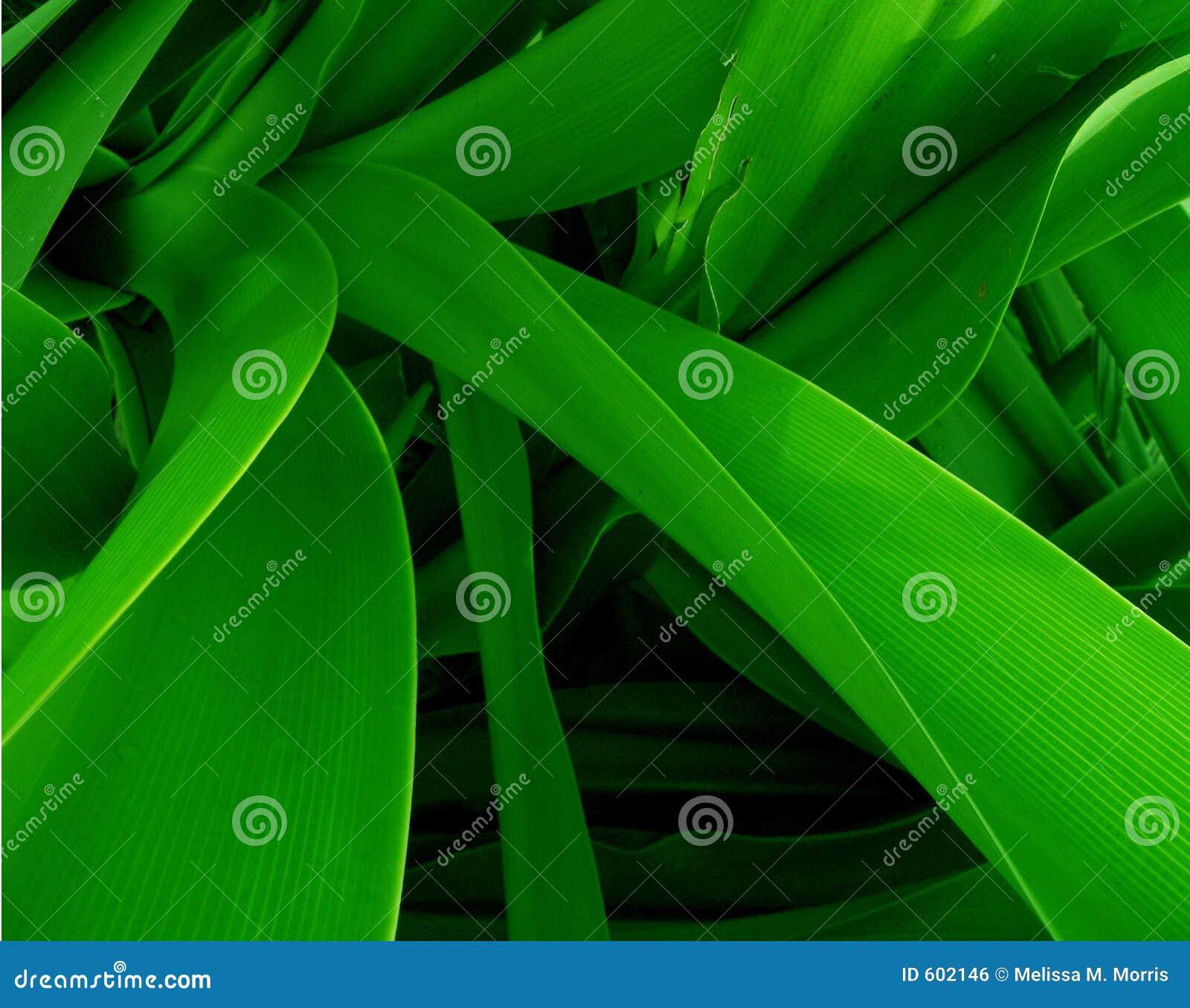 Groene Wildernis