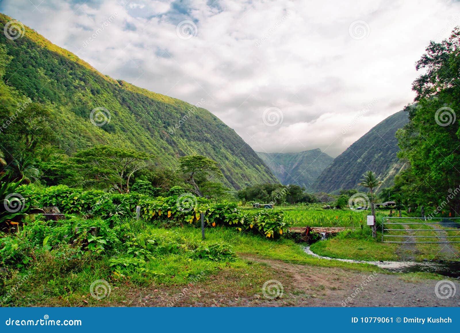 Groene wildernis van Hawaï