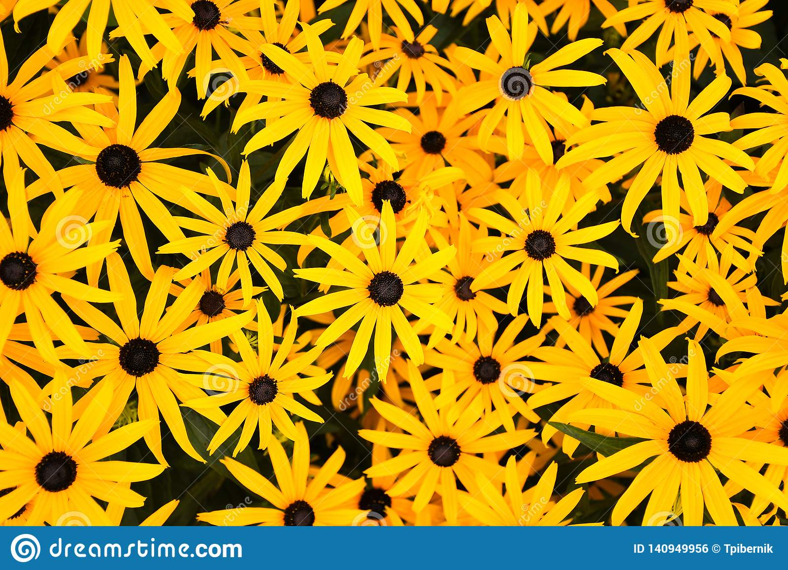 Groep bloeiende glanzende gele bloemen