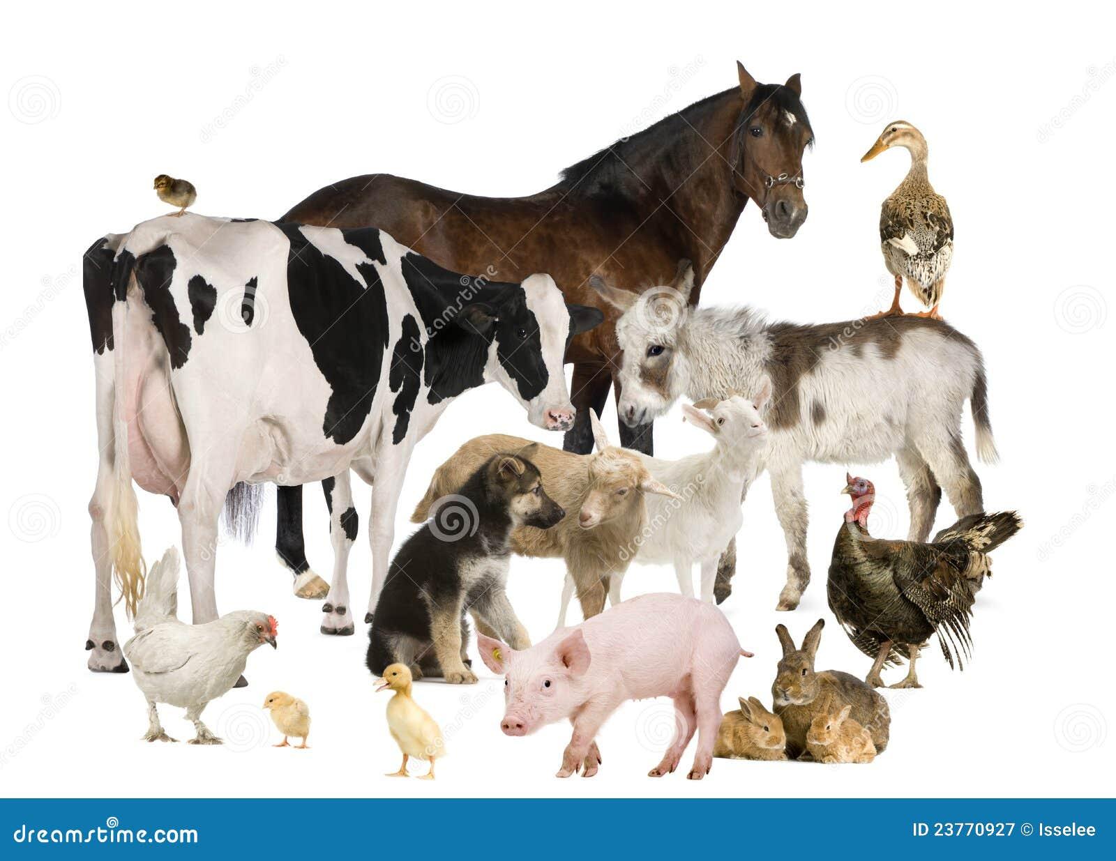 Groep de dieren van het Landbouwbedrijf