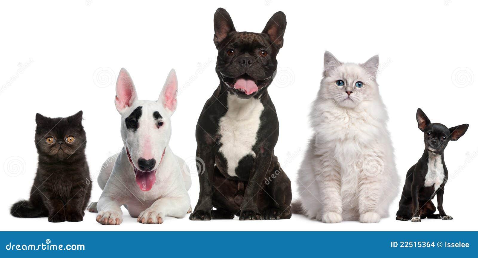Groep die katten en honden voor wit zit