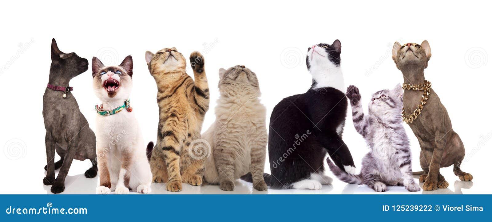 Groep die van zeven leuke katten omhoog kijken