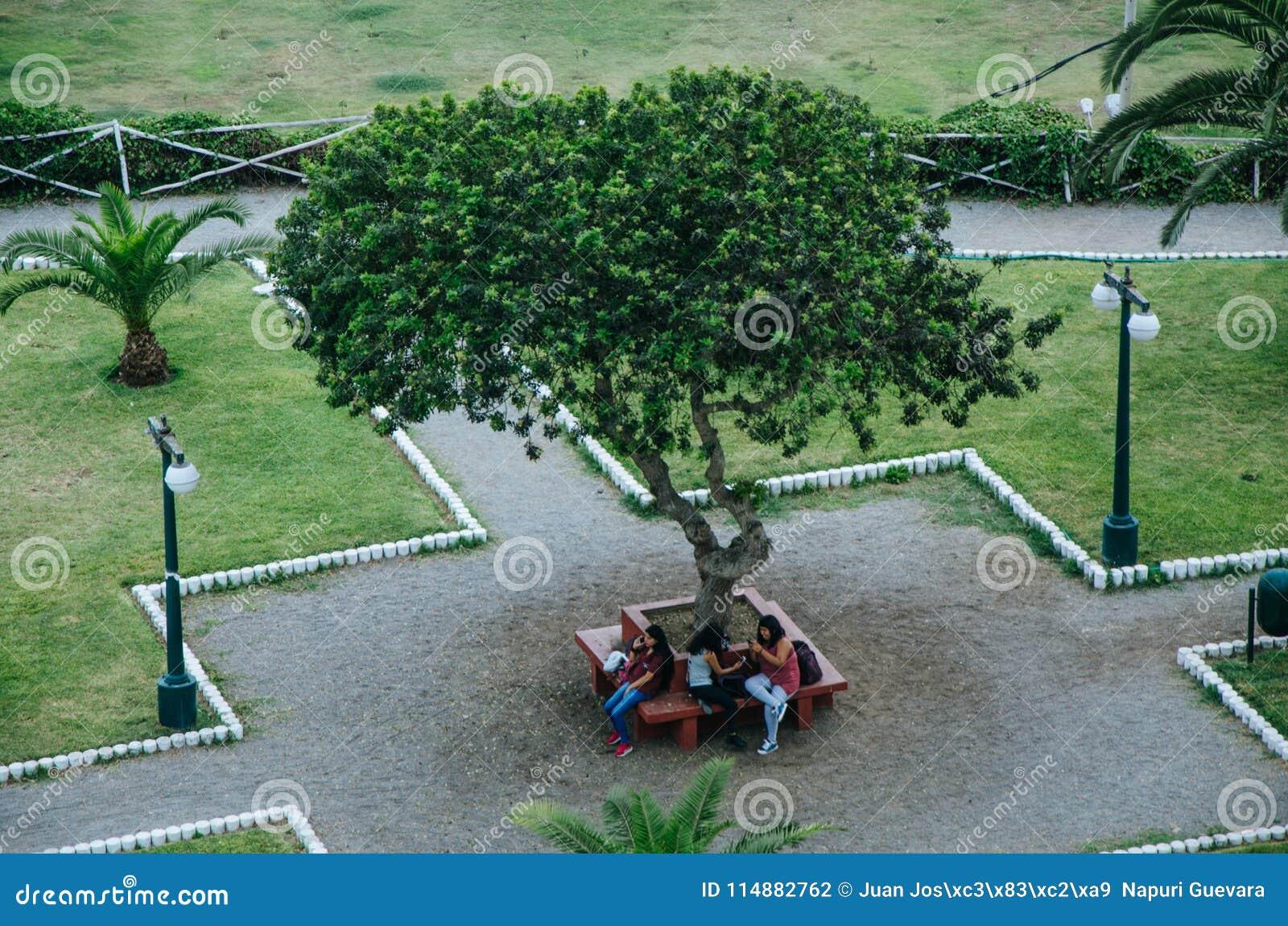 Groep die vrienden drie vrouwen, op bank in park zitten die afzonderlijk hun telefoons bekijken die mededeling losmaken