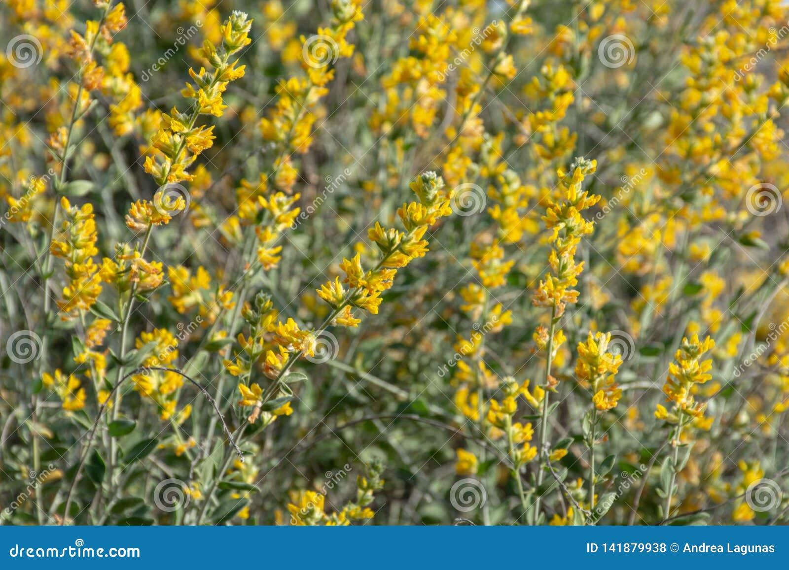 Groep gele bloemen