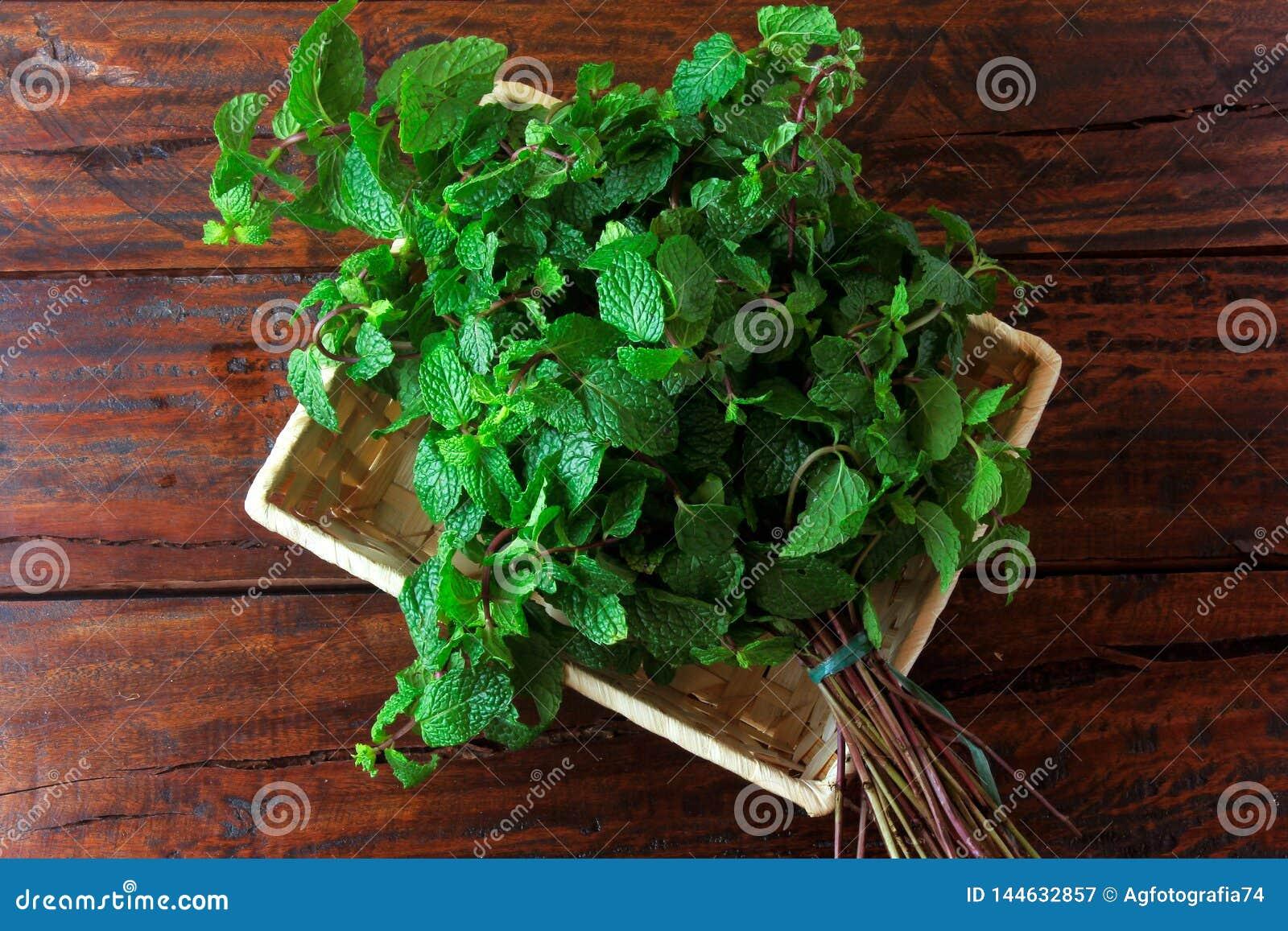 Groep groene organische verse munt in mand over rustiek houten bureau Aromatische pepermunt met geneeskrachtig en culinair gebrui