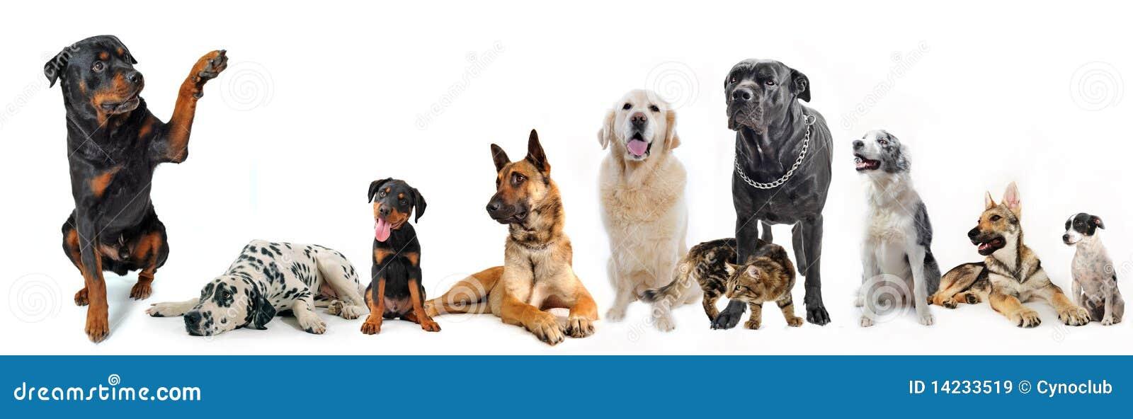 Groep honden en kat