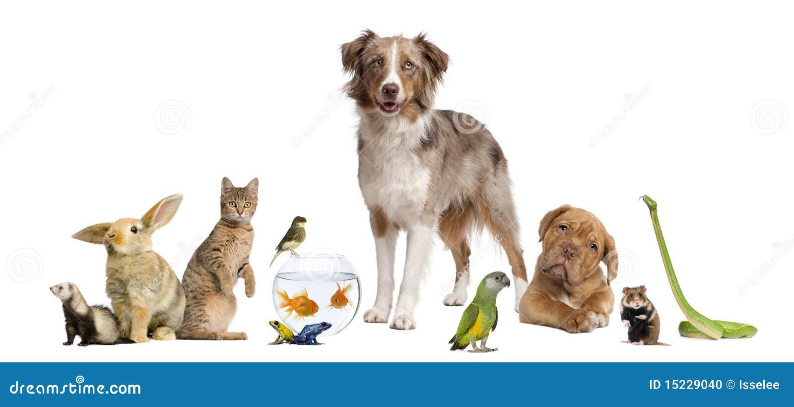 Groep huisdieren samen