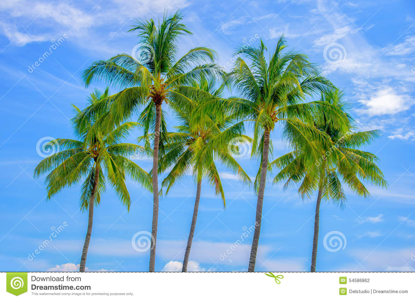 Groep palmen, blauwe hemel