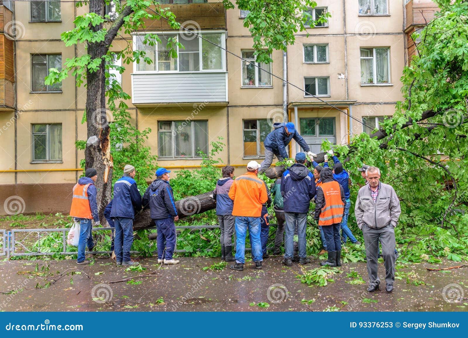Groep portiers die gevallen gigantische kastanjeboom als resultaat van de strenge orkaanwinden zagen in woonwijk van Moskou