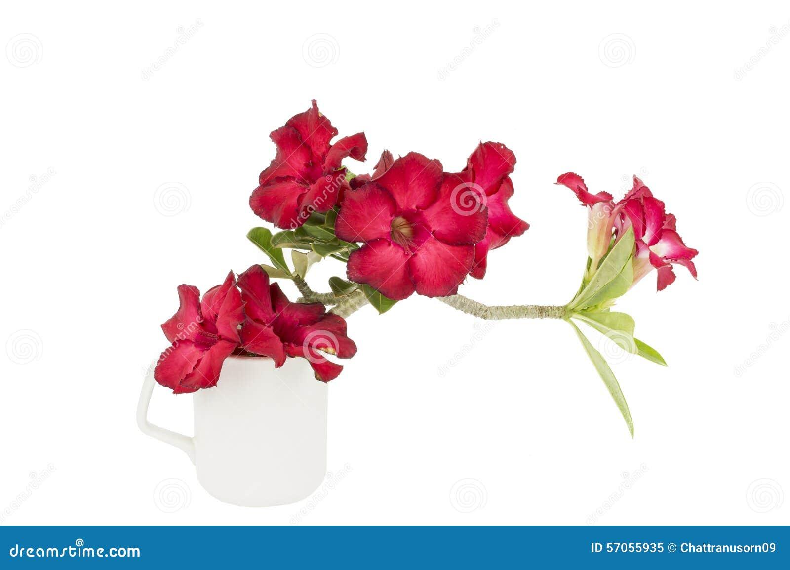 Groep rode azaleabloemen