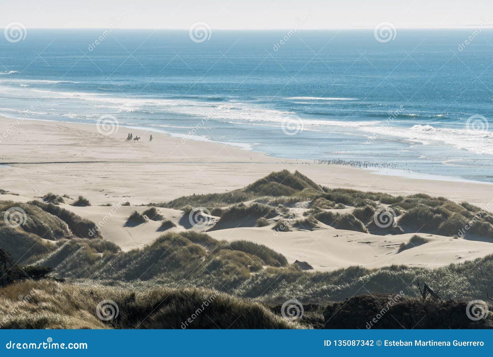 Groep ruiters op hun paarden en een troep van vogels op een strand