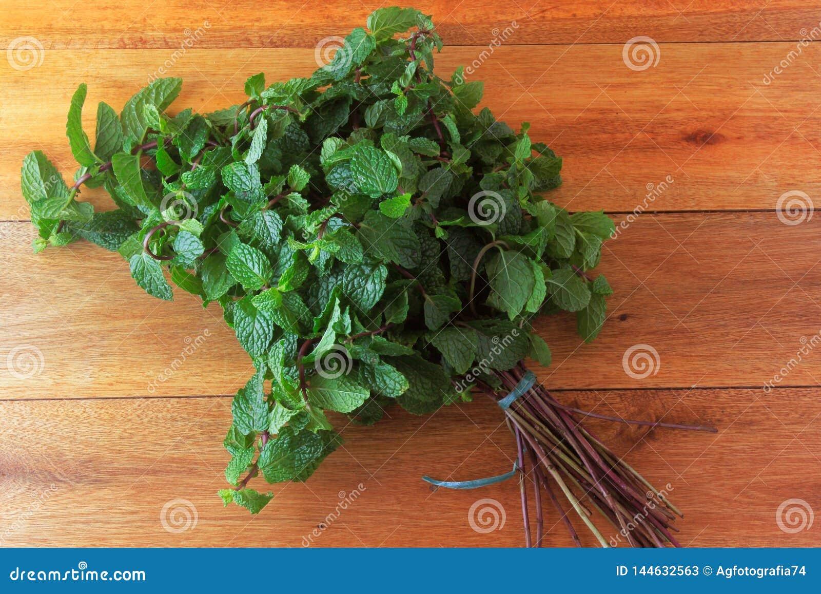 Groep verse organische groene munt op rustieke houten lijst Aromatische pepermunt met geneeskrachtig en culinair gebruik