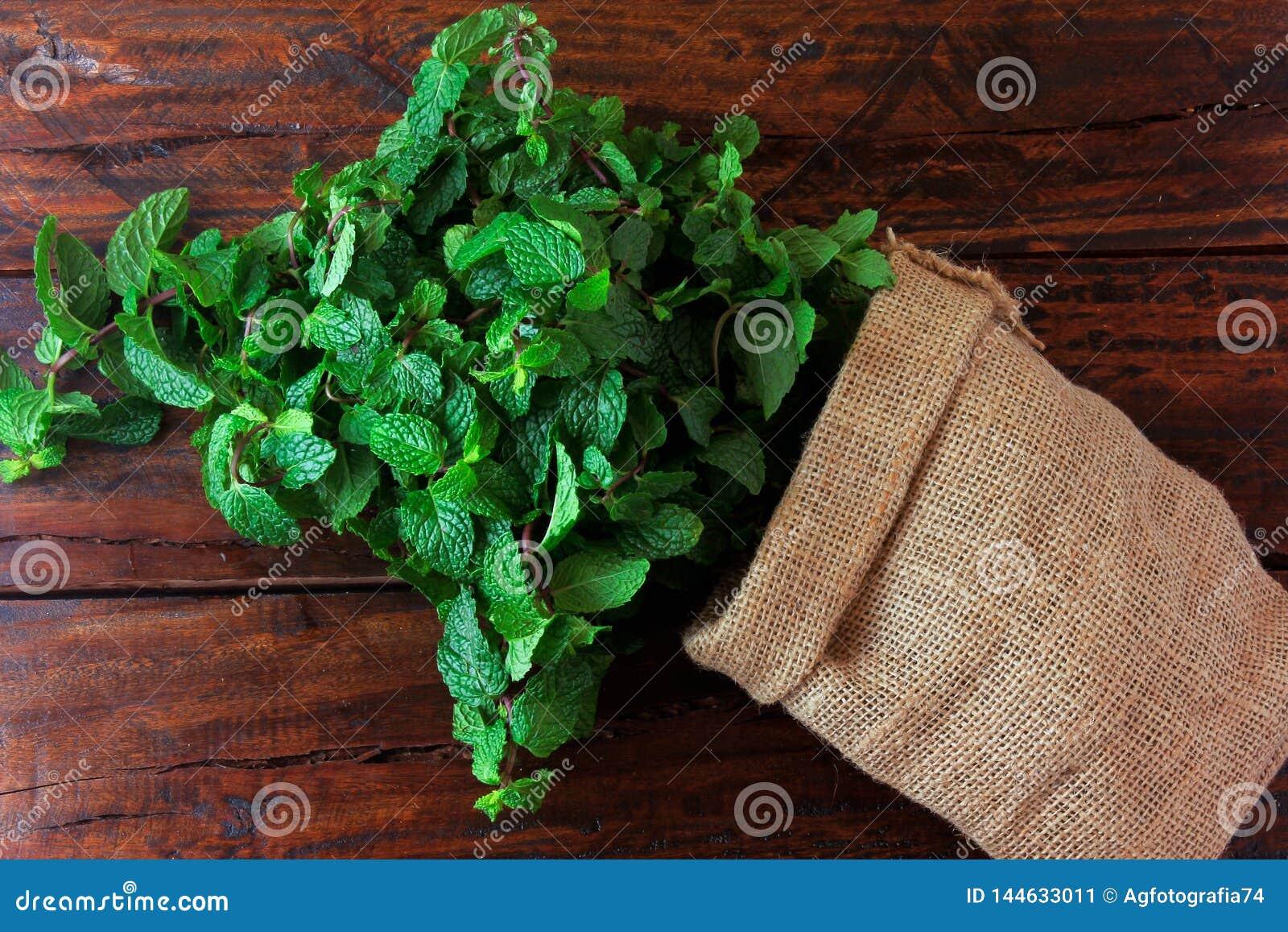 Groep verse organische groene munt in rustieke stoffenzak op rustieke houten lijst Aromatische pepermunt met geneeskrachtig en cu