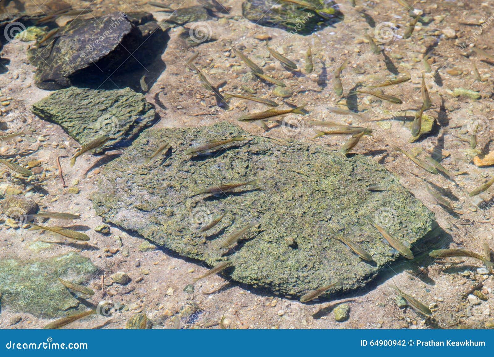 Groep vissen in duidelijke waterweg bij regenwoud
