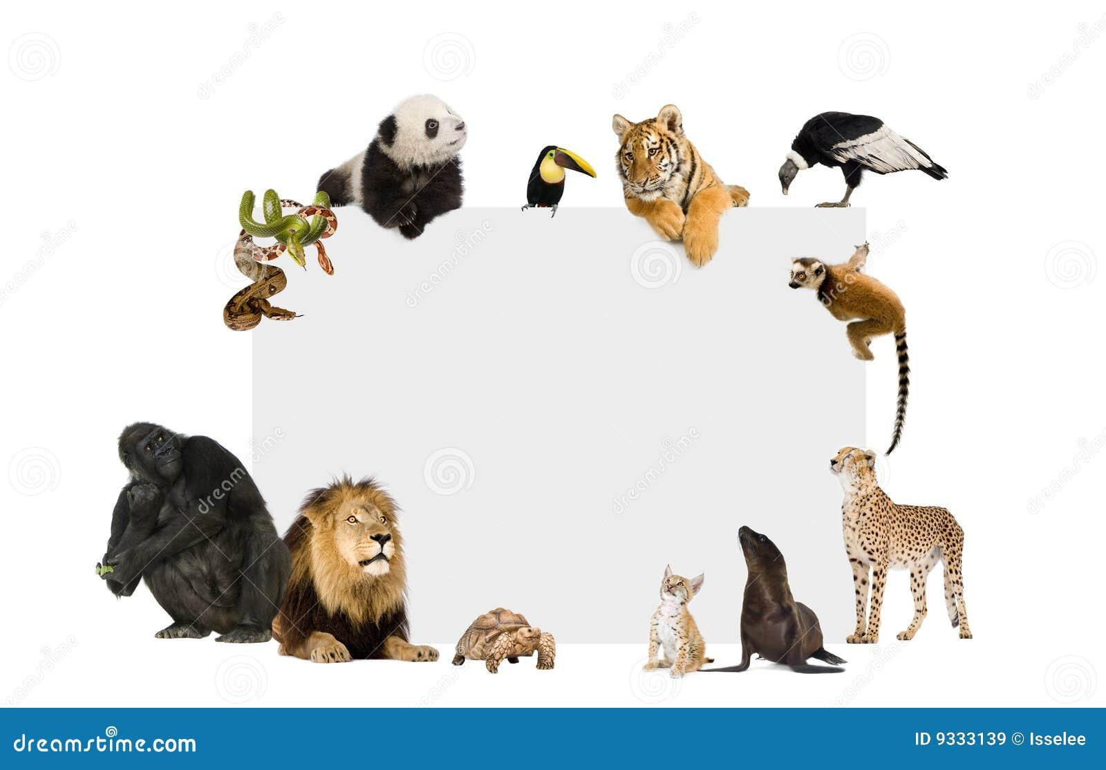 Groep Wilde Dieren Rond Een Lege Affiche Stock Afbeelding
