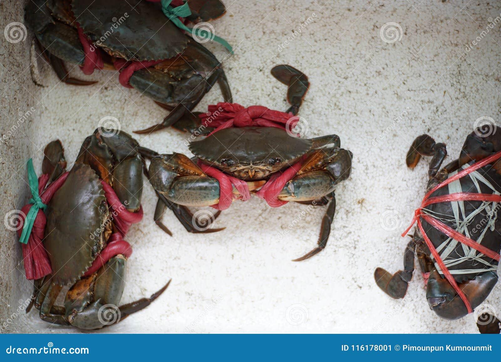 Groeps overzeese Zwarte krab in schuimdoos