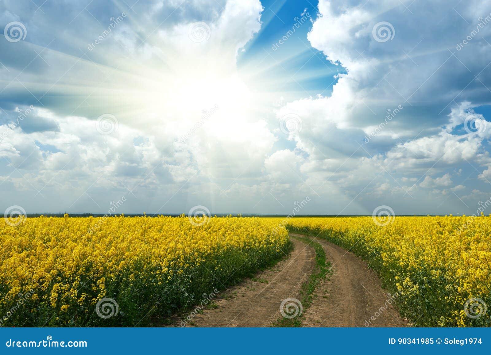 Grondweg op geel bloemgebied met zon, mooi de lentelandschap, heldere zonnige dag, raapzaad
