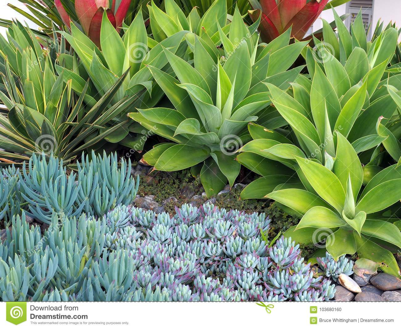 Small Succulent Cactus Plants In Rock Garden Stock Photo Image Of Decorative Groomed 103680160