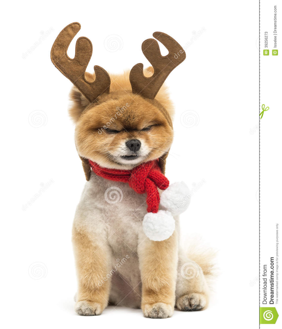 what do reindeer use their antlers for dogs