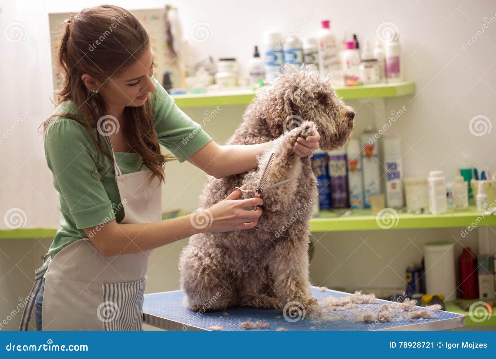 Groomer is cutting a dog hair