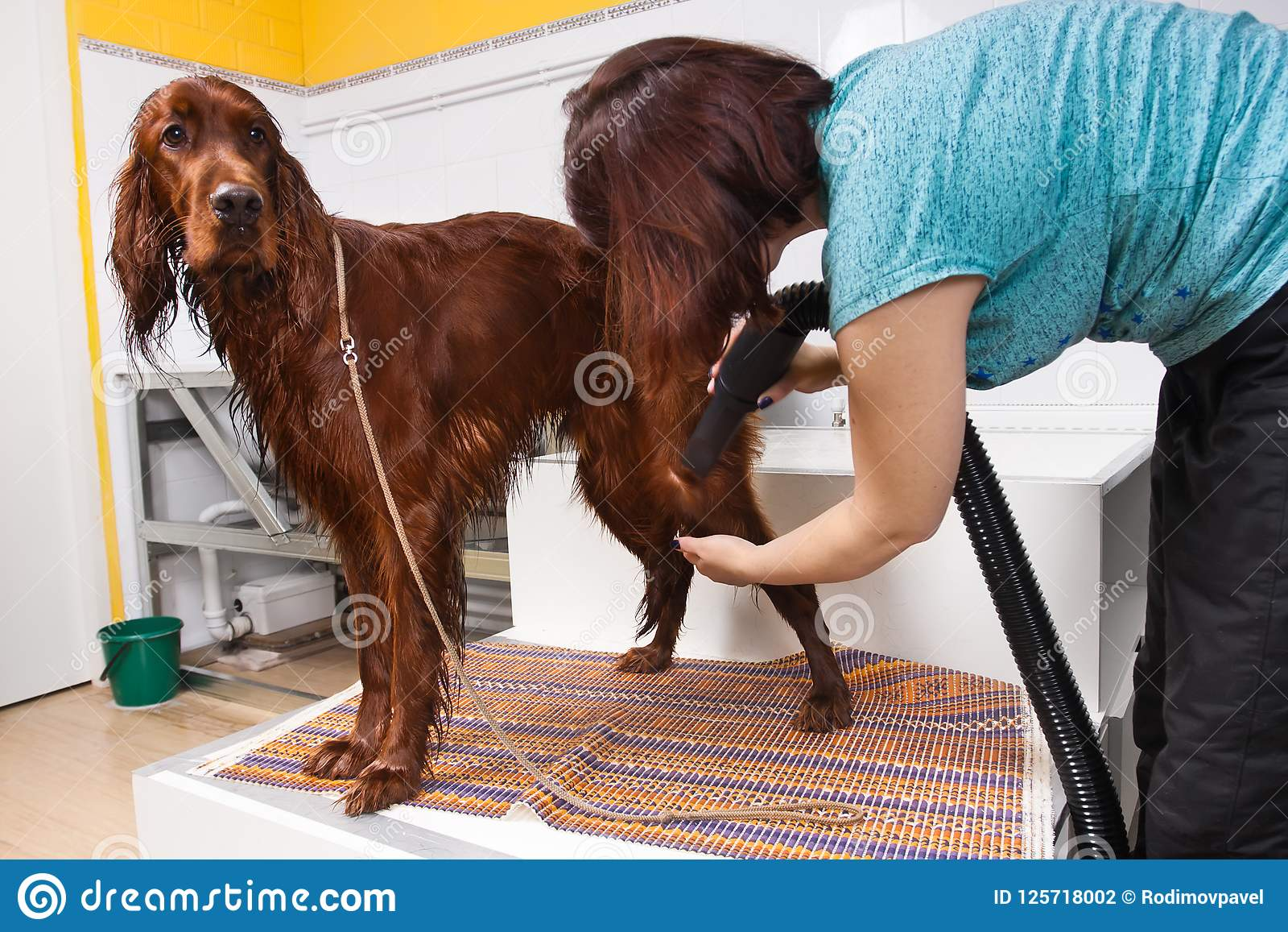 Groomer with hair dryer and dog at salon