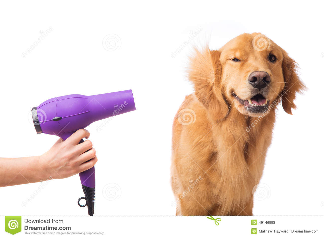 Grooming Dog Stock Photo Image 49146998