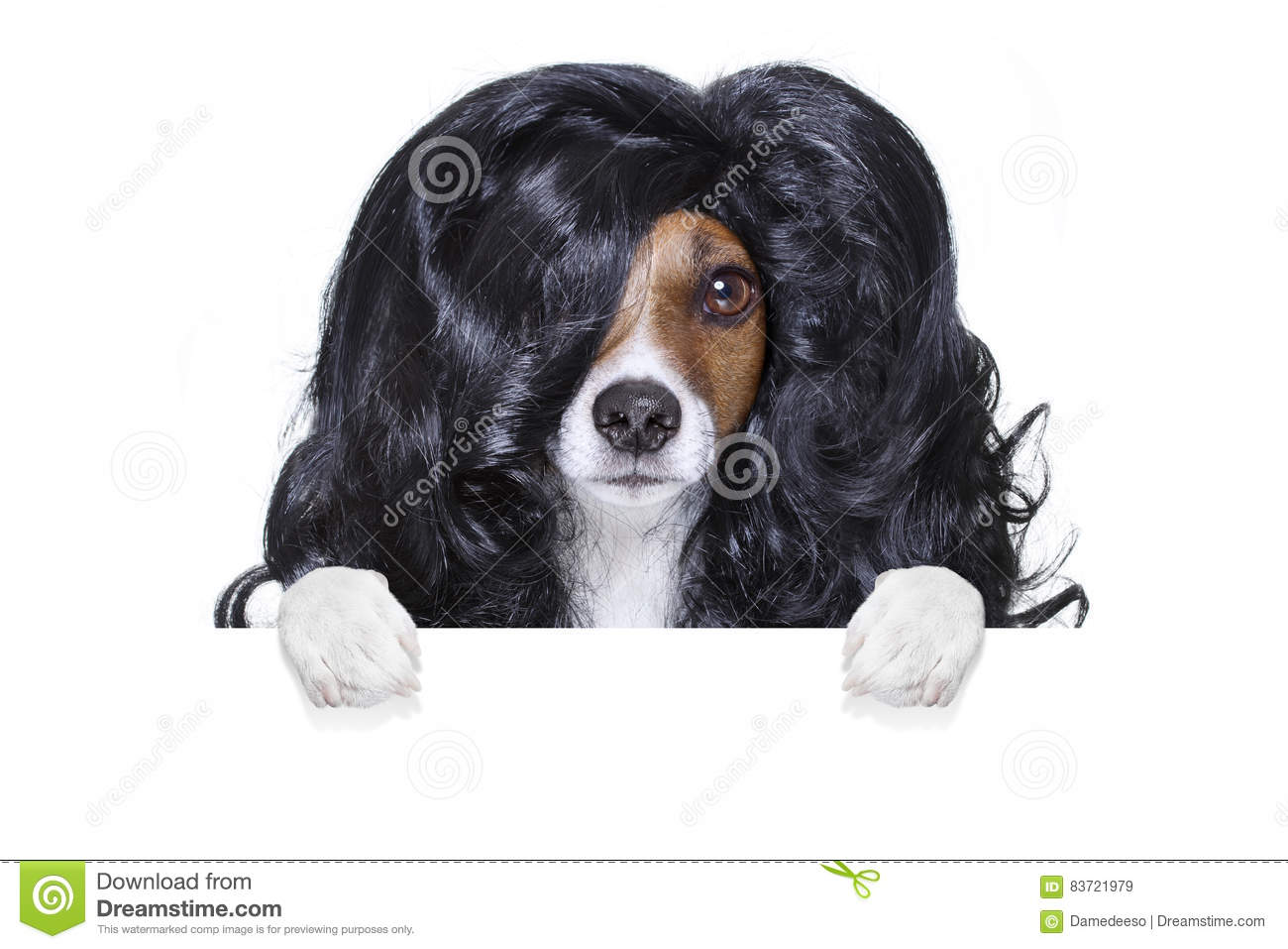 Grooming Dog At The Hairdressers Stock Photo