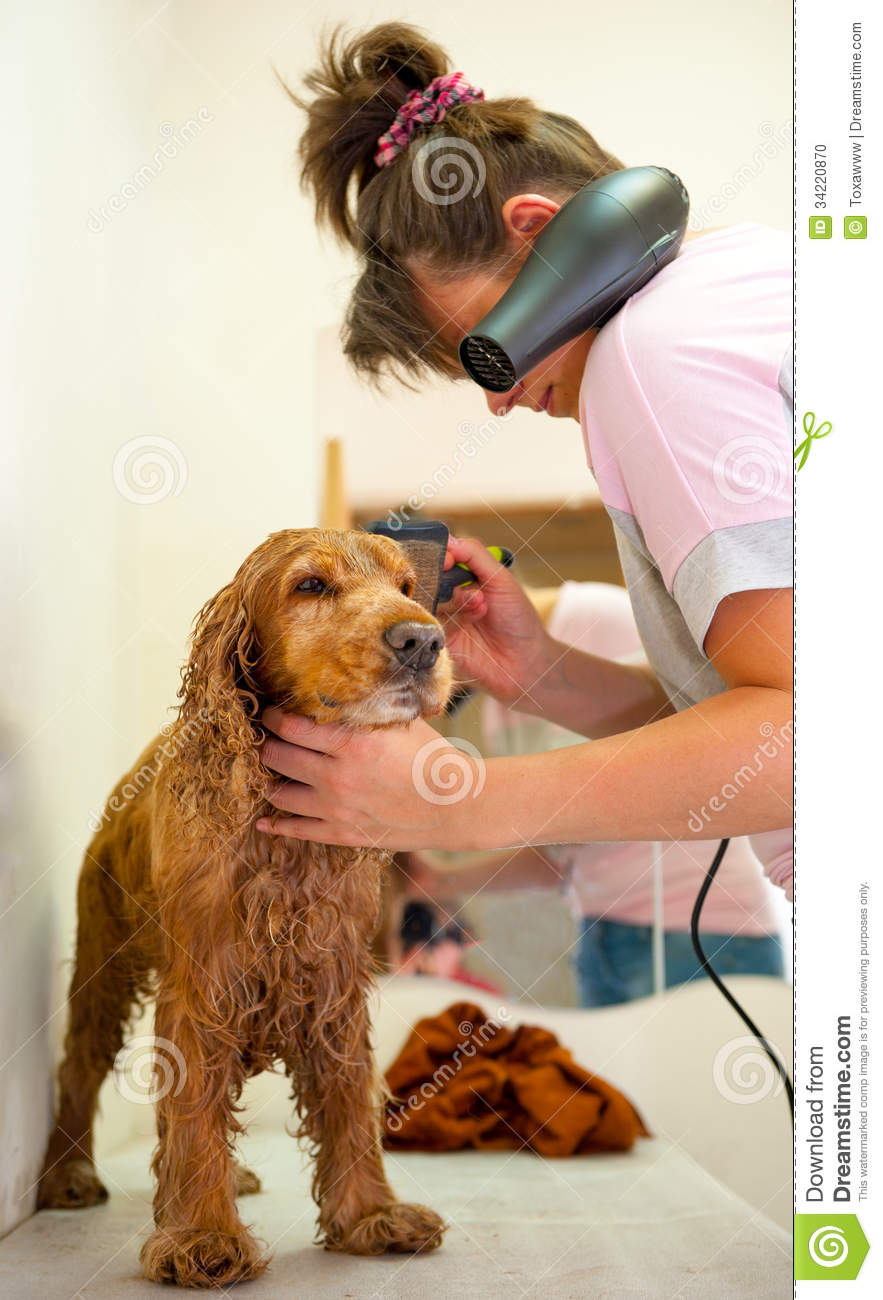 cocker spaniel grooming anal area