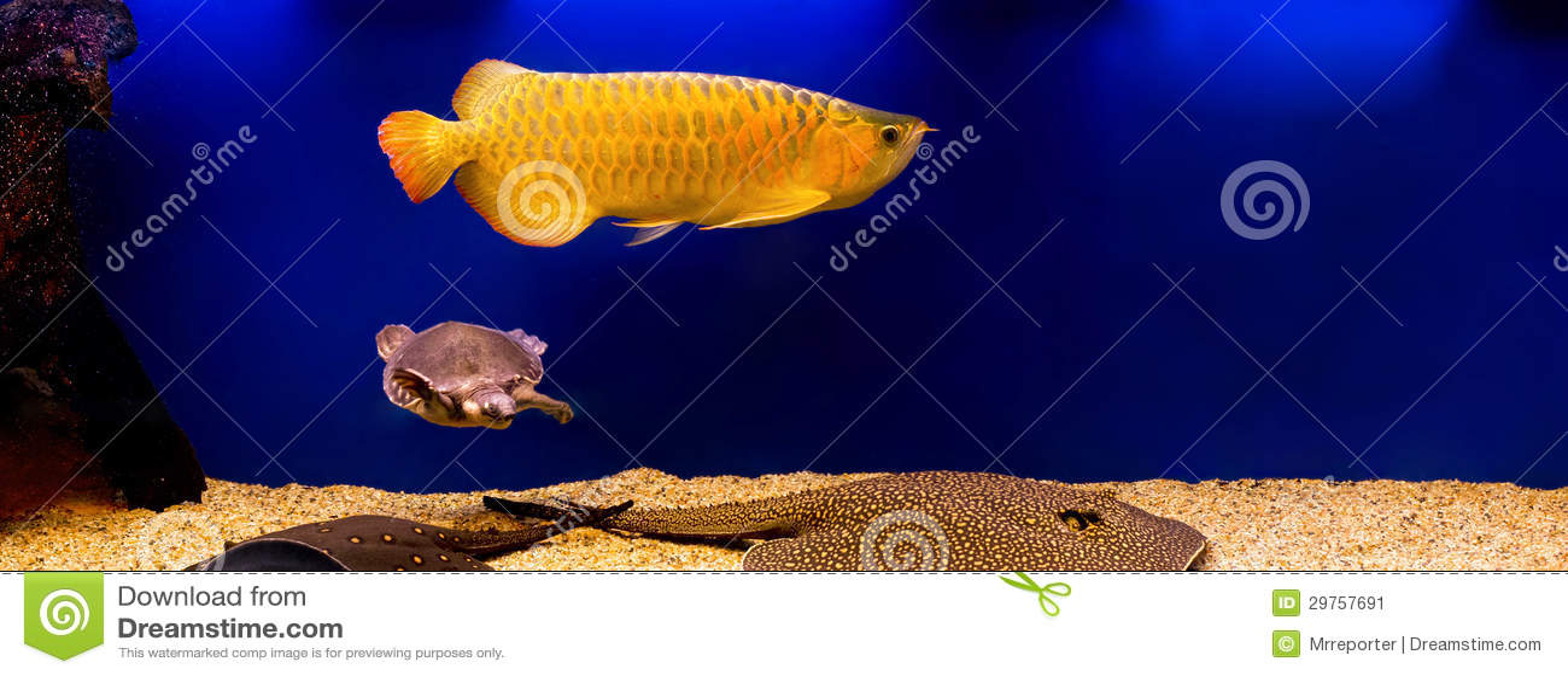 het aquarium van de luxe stock afbeelding afbeelding bestaande uit decor 29757691. Black Bedroom Furniture Sets. Home Design Ideas